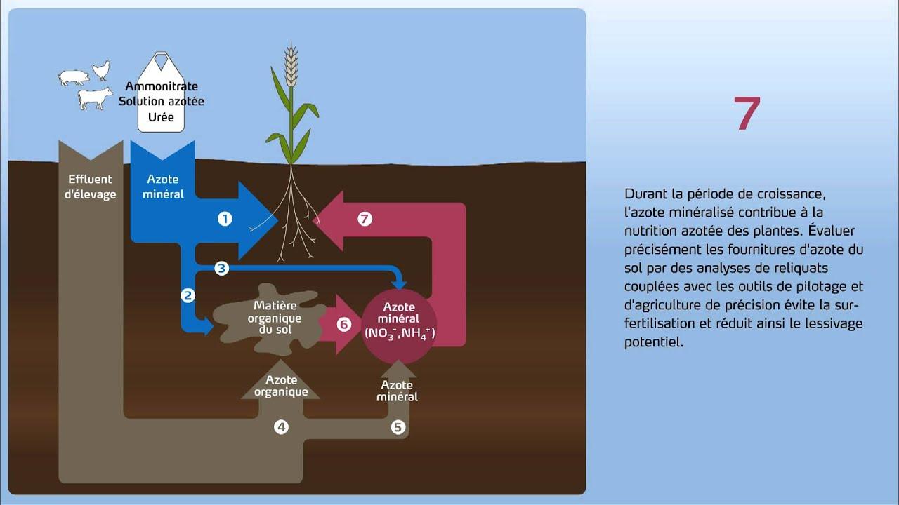 Comprendre le lessivage des nitrates  Yara France