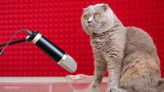 ASMR / Котик мило лакает