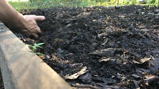 Leaf composting:  From Leaves to Soil in 231 Days