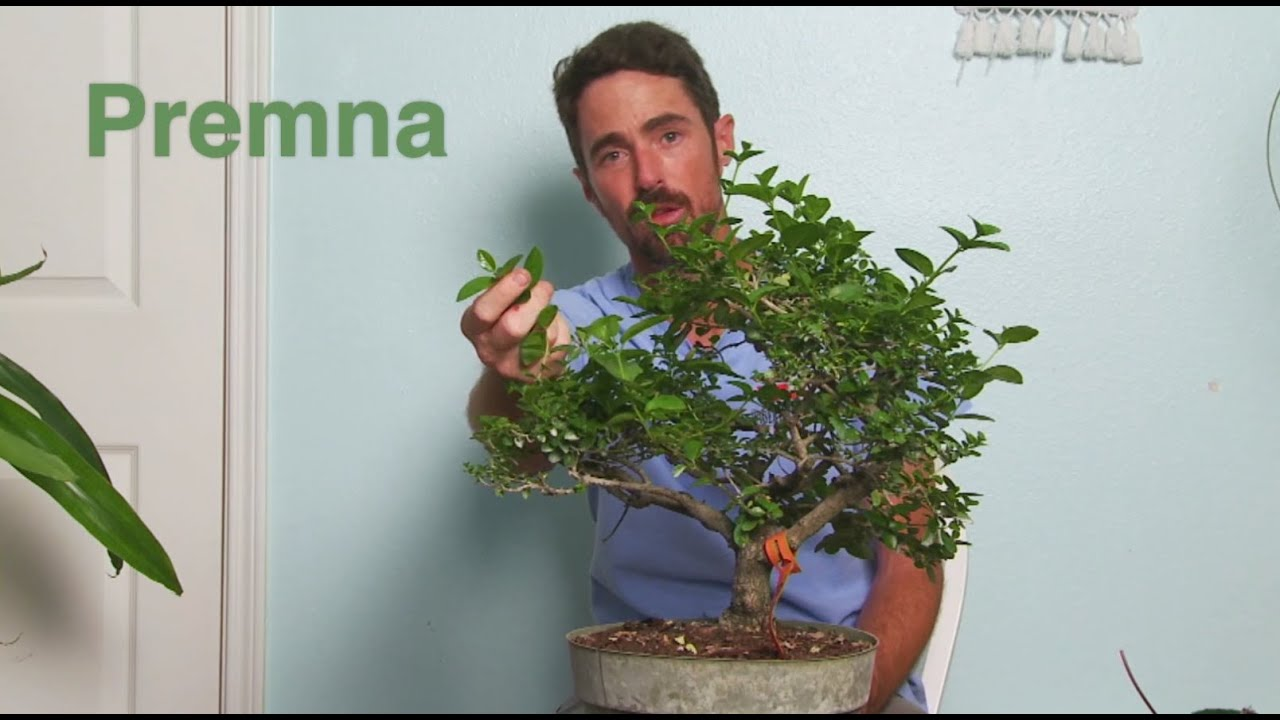 Shohin Bonsai With Mike Lane Presented By Austin Bonsai Society Live Stream 6 10 20 Youtube