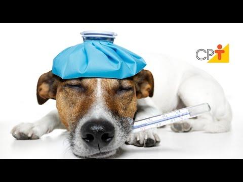 Hotel para Cães e Gatos: Acidentes