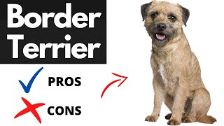 border terrier pros and cons