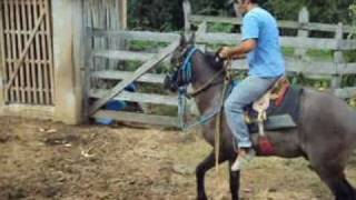 1º Montaria no Cavalo Tabaco