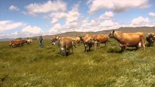 Claravale Dairy Farm
