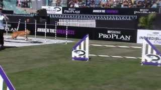 Large Dog Agility - 2013 Purina® Incredible Dog Challenge® Las Vegas