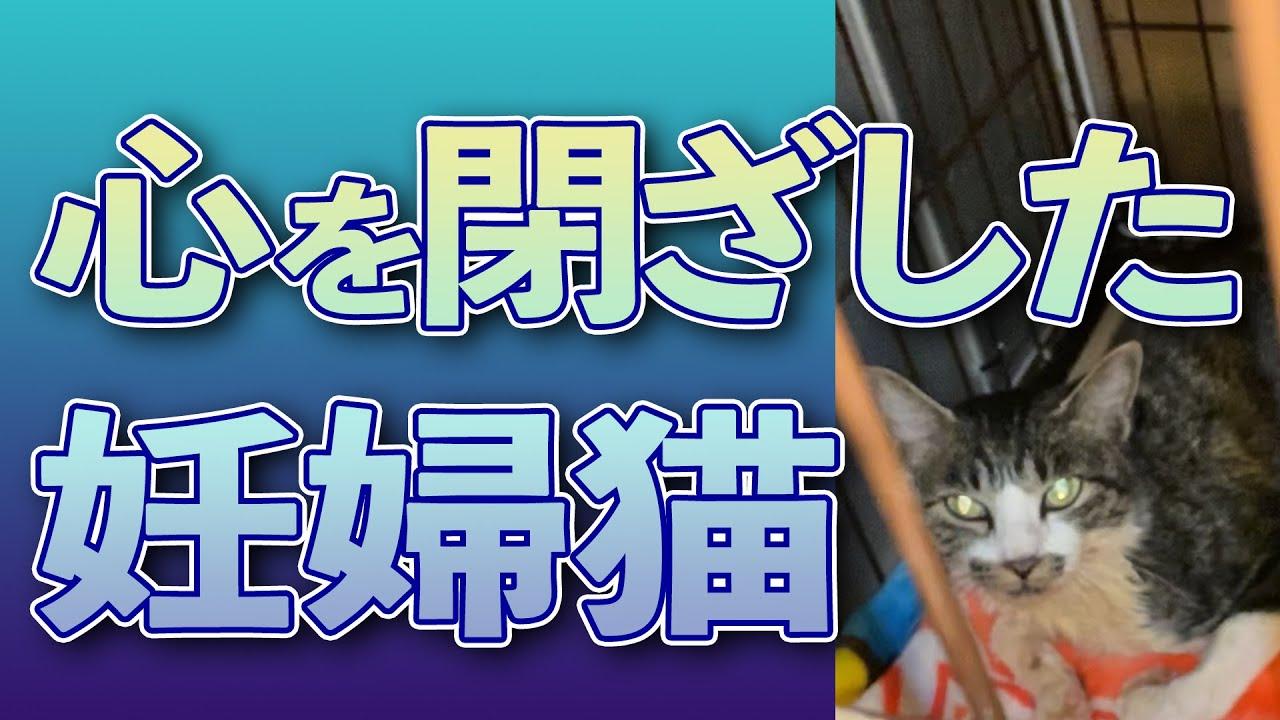 #165【心配…】心を閉ざした妊婦猫ネネ