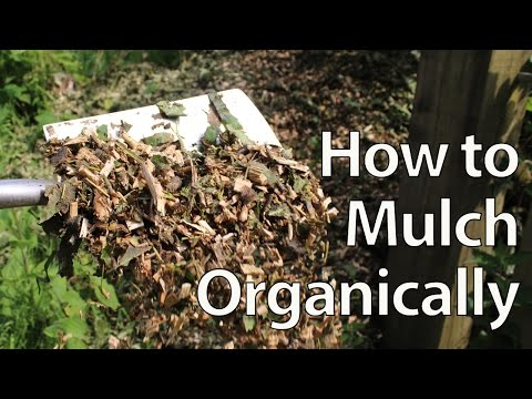 How to Organically Mulch and Fertilize your Garden to Grow Better Food