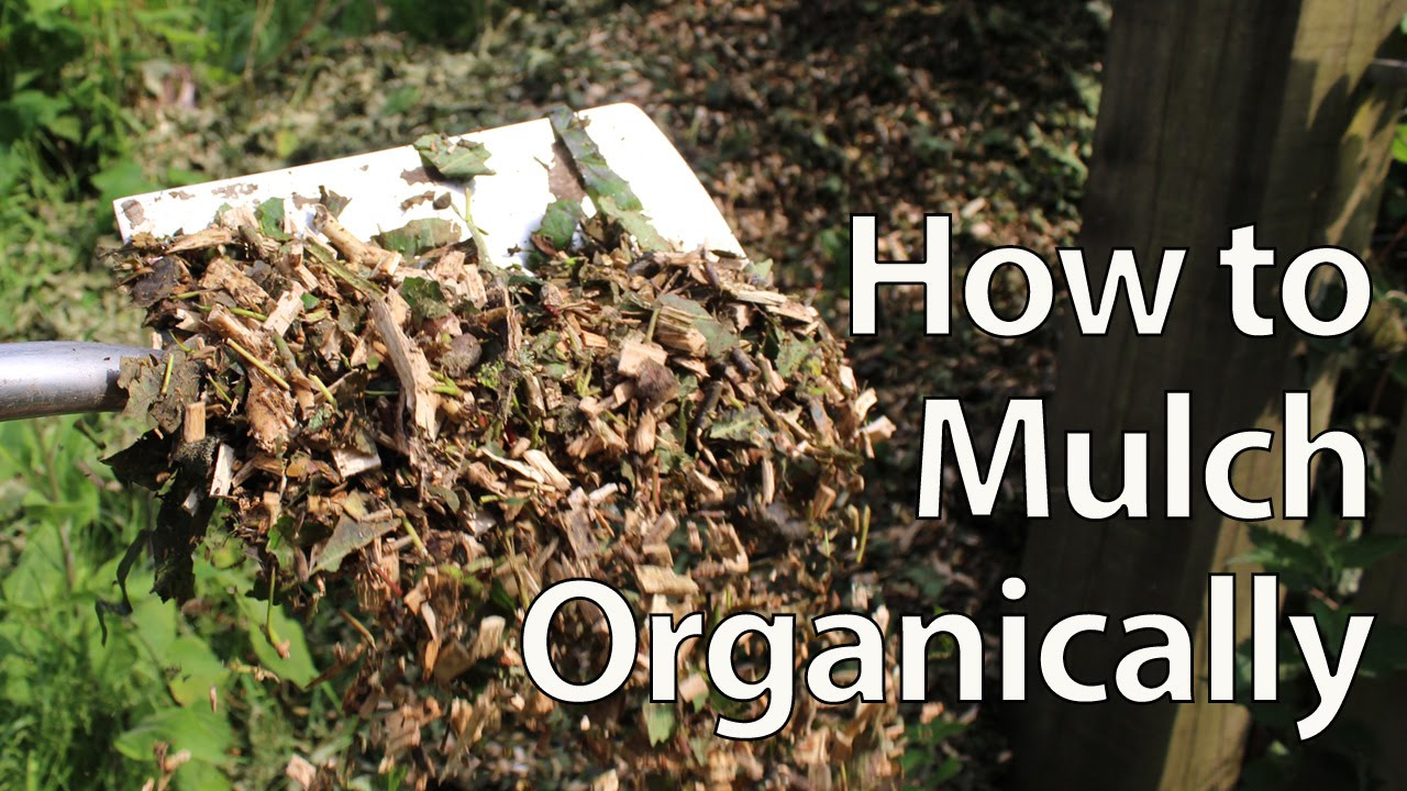 How To Organically Mulch And Fertilize Your Garden Grow Better Food