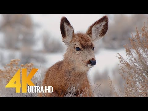 wintertime-in-eastern-washington---4k-nature-relaxation-video-with-music-and-nature-sounds---3-hrs