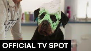 SHOW DOGS   VOX POP TV SPOT