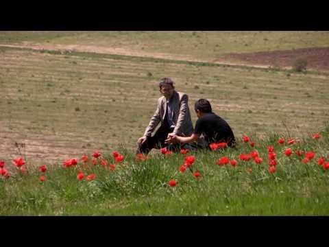 Вопрос: Что характерно для тюльпанов Грейга?