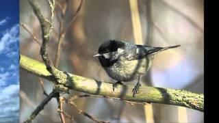 Hlasy okolo nás: Ptáci 2