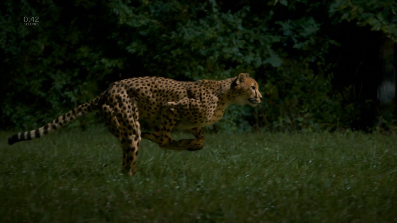 Download Cheetahs on the Edge Directors Cut