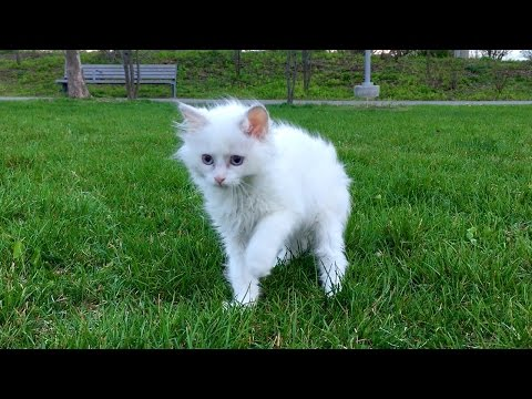 Ragdoll kitten's first time outside — Mozzarella goes to the park!
