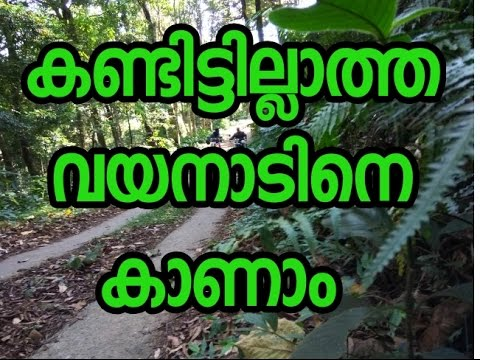Tourist place in kerala - WAYANAD