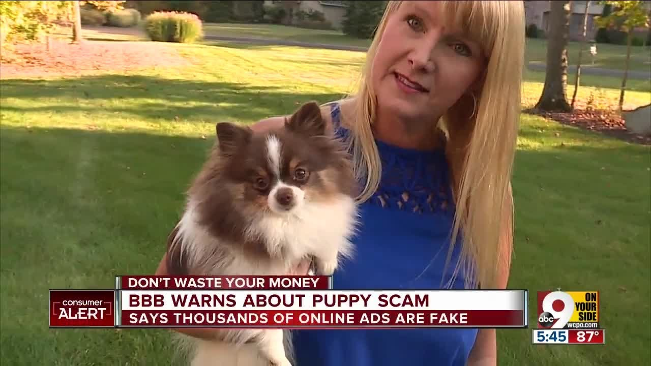 BBB warns about puppy scam - YouTube