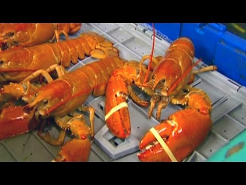 Sweden calls for trade ban on North American lobsters