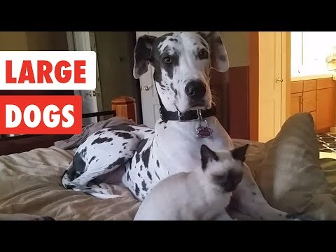 Large Dogs | Funny Dog Video Compilation 2017