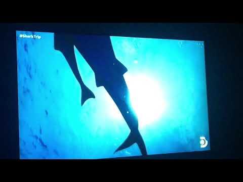 PAUL DE GELDER - SHARK WEEK - CHUM EPISODE CLIPS