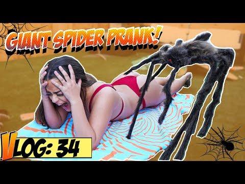 Giant Spider Bikini Prank !!! (w: Tessa Brooks)