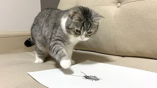 ゴキブリを描いて猫に見せたらまさかの反応に…w