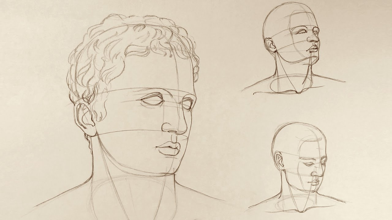 Proportions of the Head - Anatomy Master Class - YouTube