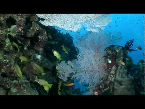 Wonders Of The Great Barrier Reef And Coral Sea Underwater Video
