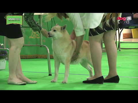 WELKS Championship Dog Show 2017 - Pastoral group FULL