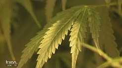 Texas House: Farmers can grow hemp, CBD can be sold