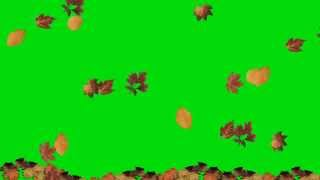 Falling Leaves Green Screen Animation