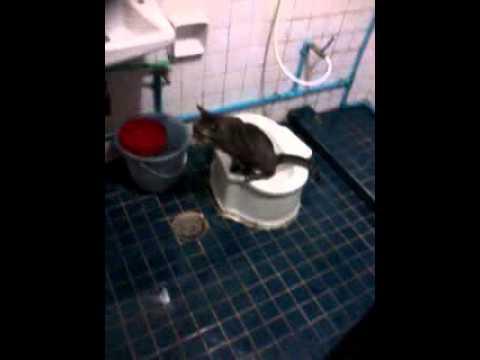 แมวฉี่ในห้องน้ำ
