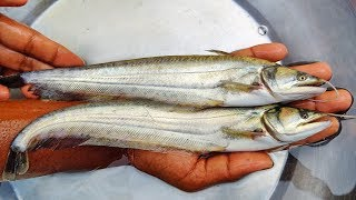 ৫ থেকে ৬ ইঞ্চি সাইজের বোয়াল মাছের পোনা | Boal Fish Farming