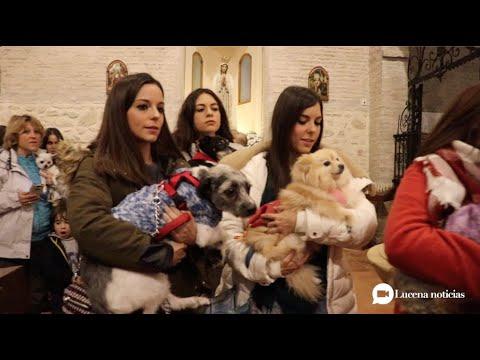 VÍDEO: Perros, gatos y otros animalitos visitan Santiago para recibir la bendición de San Antón