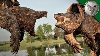 Alligator Snapping Turtle vs Common Snapping Turtle