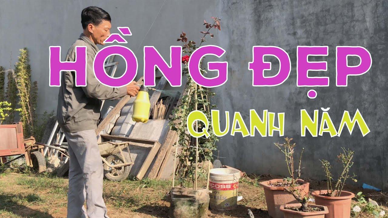 [253] Cách hăm sóc Hoa Hồng tươi đẹp quanh năm – CÂY CẢNH CHỢ HÀNG