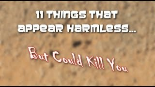 11 things that looks harmless but can kill you
