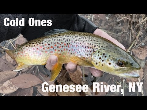 WB - Fly Fishing Cold Ones, Genesee River, New York - November '17