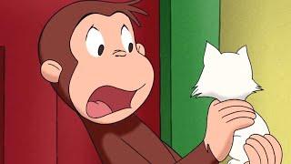 Jorge el Curioso en Español 🐵Fiebre de Mono 🐵Mono Jorge🐵Caricaturas para Niños