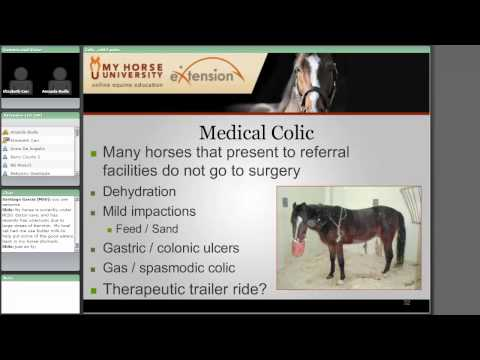 Colic: Diagnosis, Treatment and Prevention