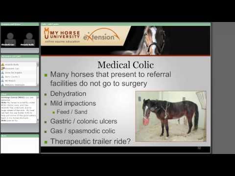 Colic: Diagnosis, Treatment And Prevention
