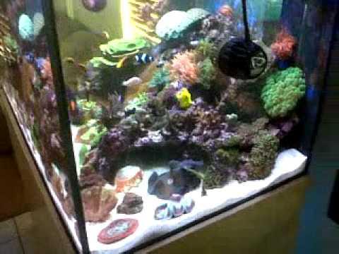 My marine aquarium- south africa