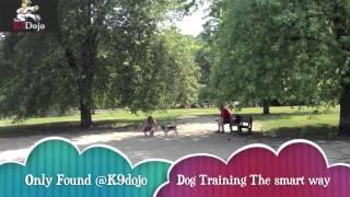 K9dojo Toronto Dog Training Come Command Positive Methods