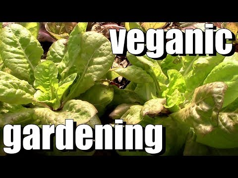 What is Vegan Organic / Veganic Gardening & Does It Work?