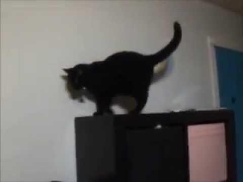 katris cat furniture