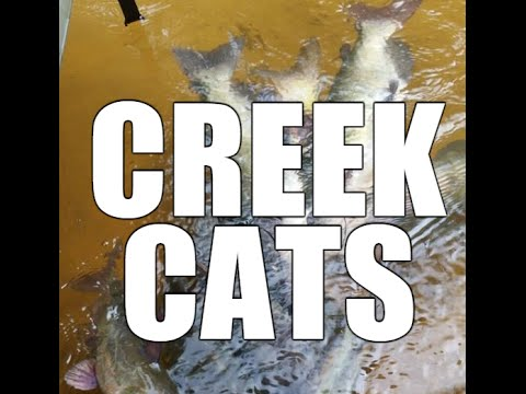 Small Creeks Tons Of Catfish