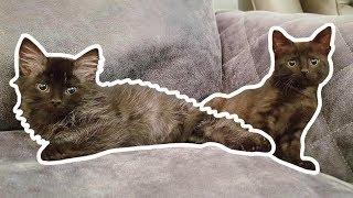Kittens & Counterweights
