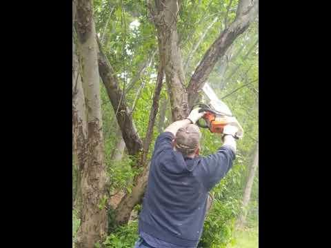 Tree Cutting Mishap