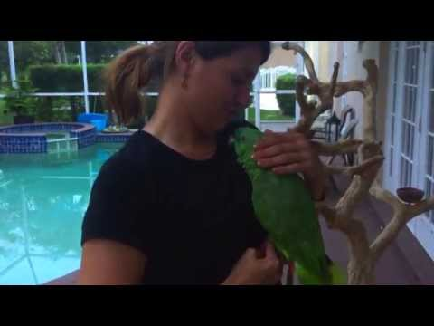 Amazon Parrot Missed Mom and Cries Like a Baby – Bird Gardens of Naples