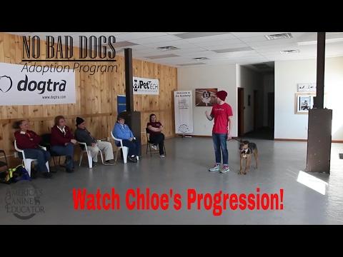 No Bad Dogs Adoption program- Chloe's first class