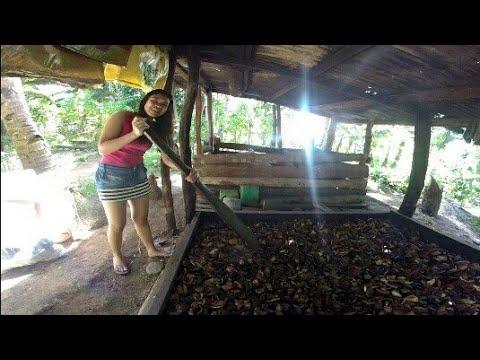 Ganggangan/ Coconut Dryer In Bohol Philippines